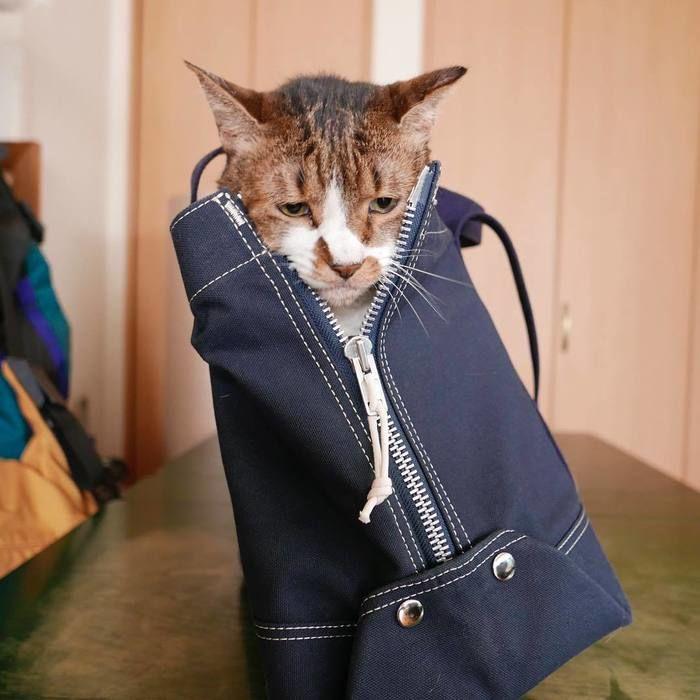 ペットを入れたスプーンフルのトートバッグ