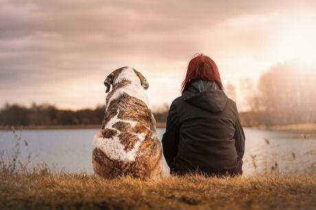 湖の辺りに女性と犬が座っている写真