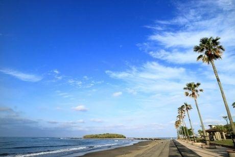 海沿いに生えているヤシの木の写真