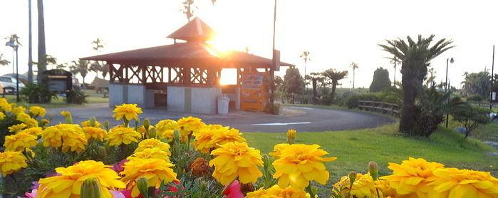 宮崎白浜オートキャンプ場COCONAに咲いている花の写真