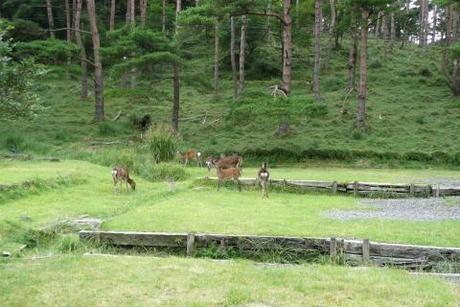 えびの高原キャンプ村に鹿がいる写真