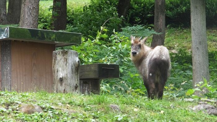 立山山麓家族旅行村にいる動物の写真