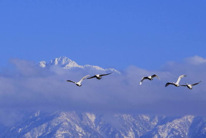 山脈をバックに鳥が飛んでいる写真