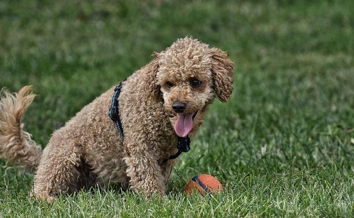 芝生で遊ぶ犬の写真