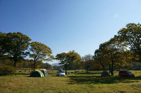 芝生のテントサイトの写真