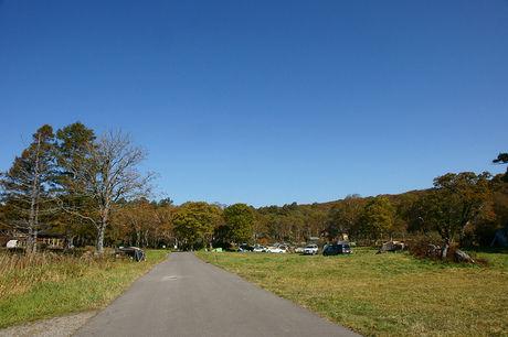自然豊かな道路の写真