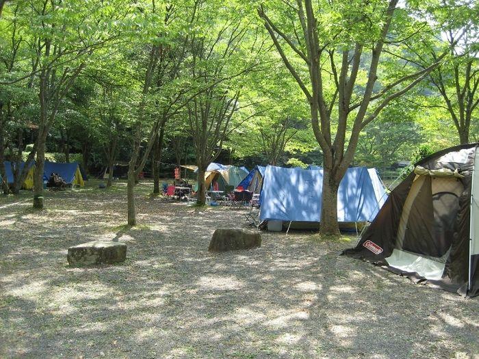 みと自然の森のキャンプサイトの写真