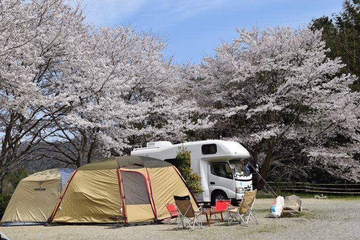 桜の木の下に貼ってあるテントとキャンピングカーの写真