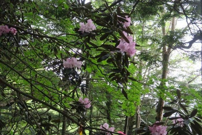 花が咲いている木の写真