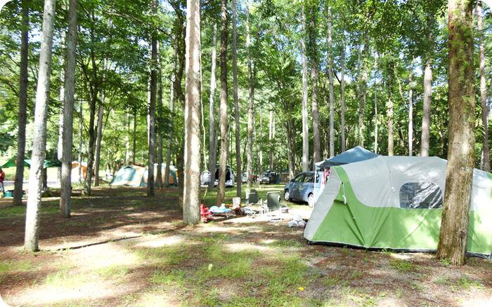 まほーばの森のテントサイトの写真