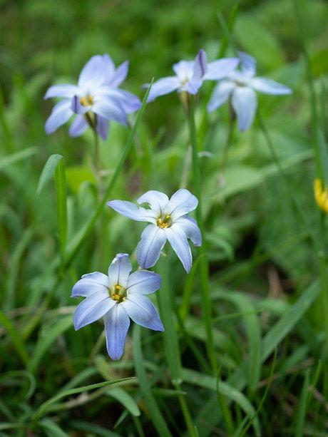 とちのき村の花の写真