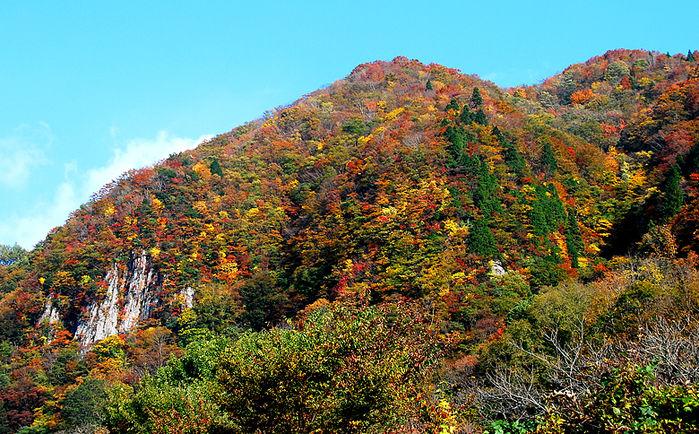紅葉した山の写真