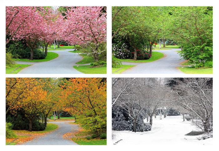 四季によって木の景色が移ろう写真
