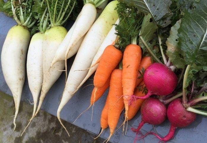 大根、人参等の野菜