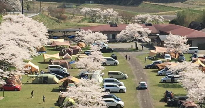 桜の木が立っている駐車場