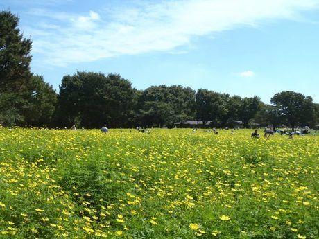 昭和記念公園の緑の草原の写真