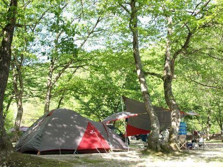 広葉樹林に囲まれたテントサイト