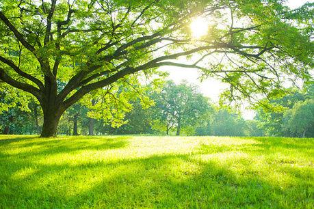 開放的な自然