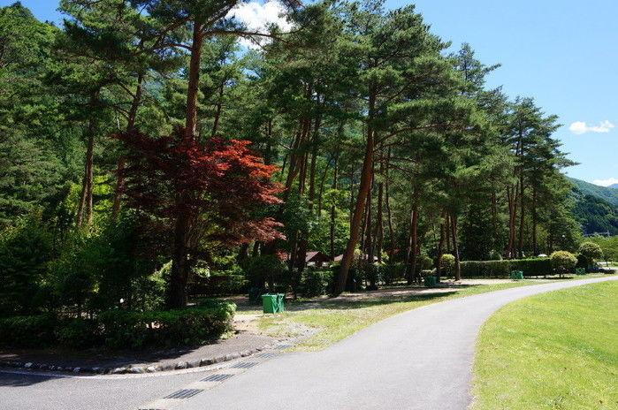 奥飛騨温泉郷の緑が豊富な道