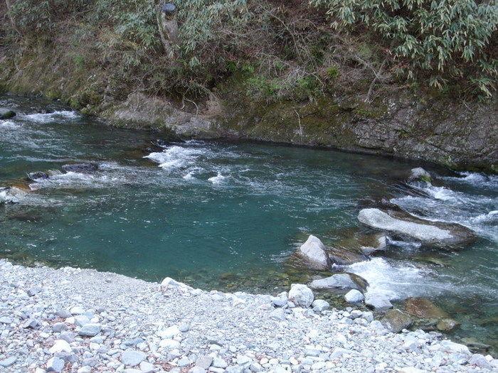 神之川キャンプ場に流れる神之川の写真