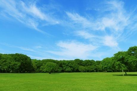 緑が綺麗な草原と青空の写真