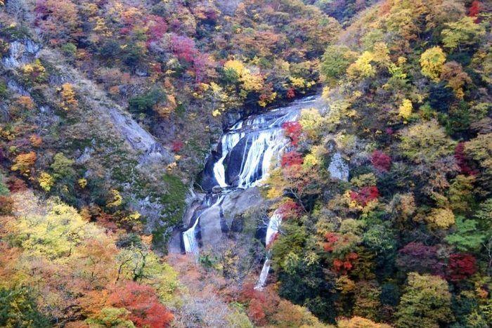 紅葉している木々の中に流れている袋田の滝