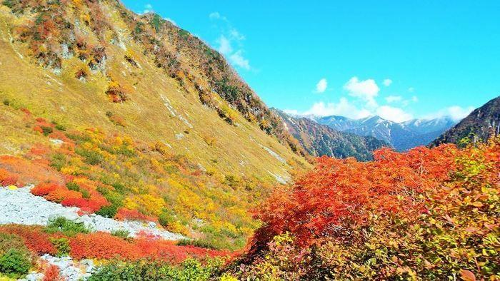 紅葉した木々の写真