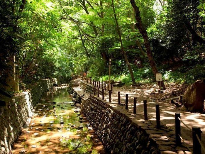 昼間の森の写真