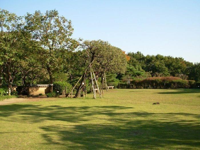 芝生広場の写真