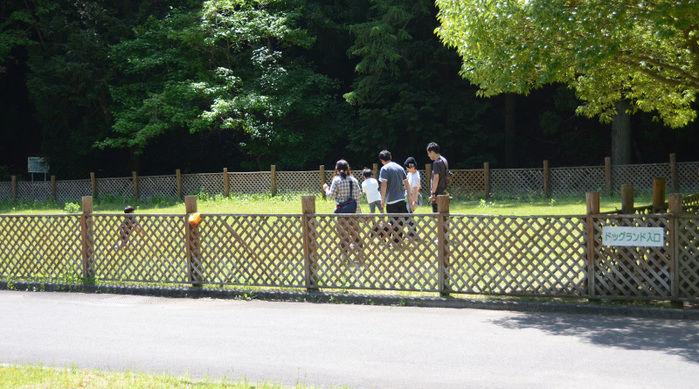 早川町オートキャンプ場のドッグラン