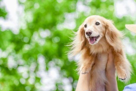 抱っこされている子犬の写真