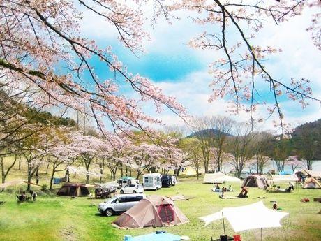 桜の下のテントサイトの写真