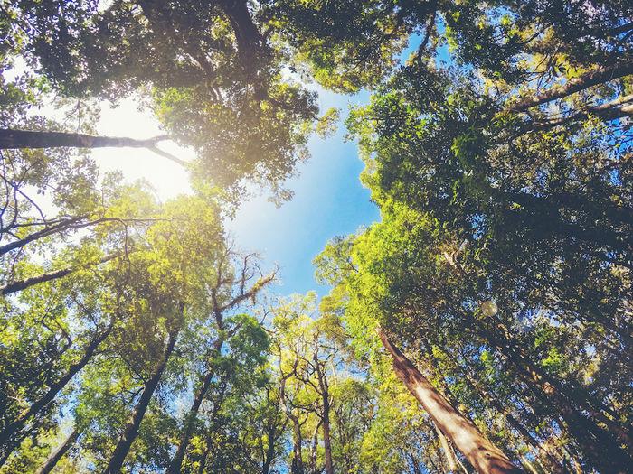 木の隙間から見える青空の写真
