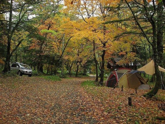 紅葉した秋の山の中でテントを張ってキャンプをしている写真