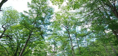 緑の林の写真