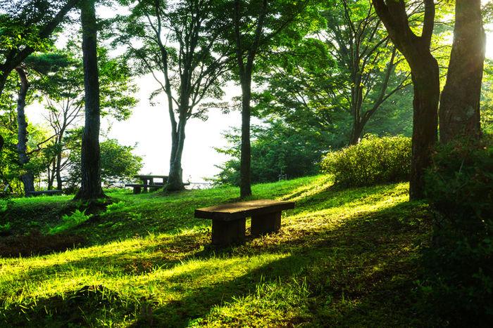 夕陽に照らされている緑地の公園の写真