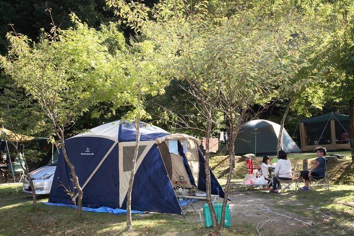 山鳥の森オートキャンプ場 フリーキャンプサイト