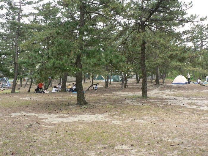 柳茶屋キャンプ場のキャンプサイト