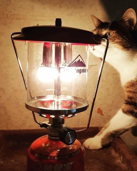キャンピングムーンと猫