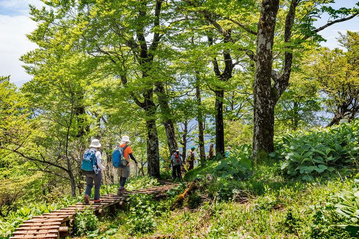 登山をしている人たちの写真