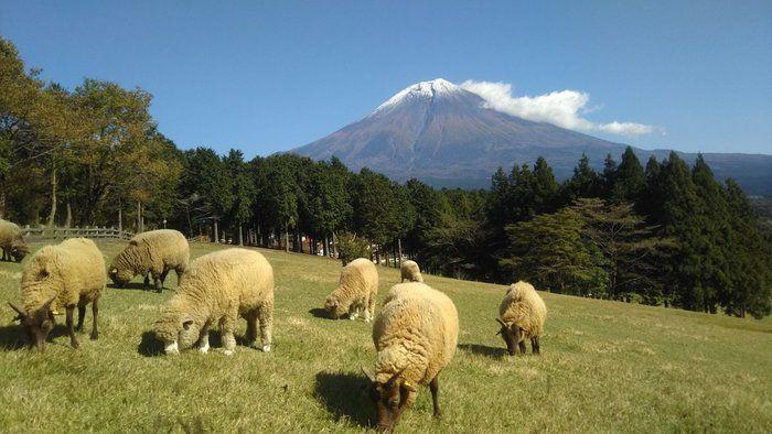 まかいの牧場に羊がいる写真