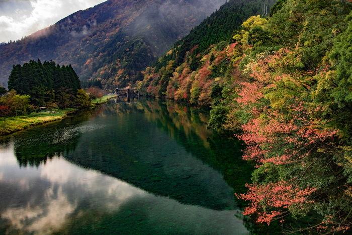 紅葉した自然の写真