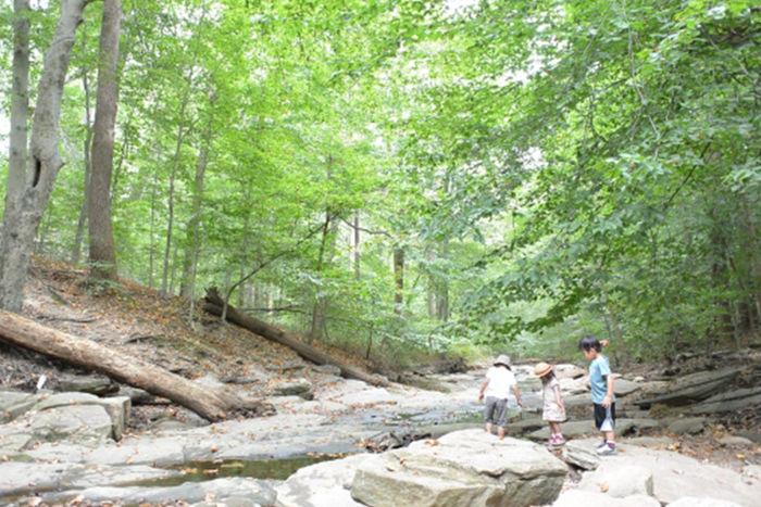 森林と川と子供