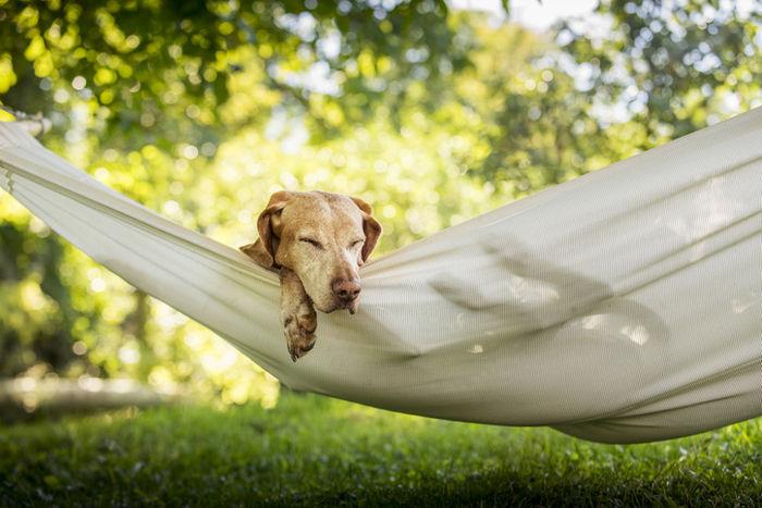 ハンモックで寝ている犬の写真