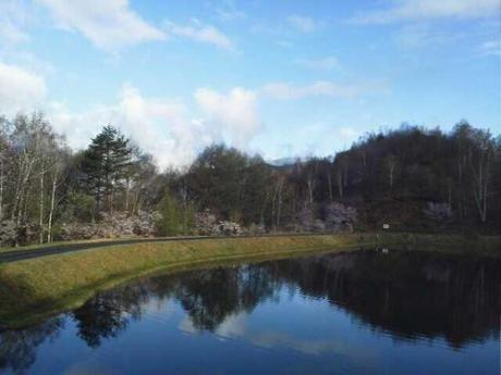 高ソメキャンプ場の釣池