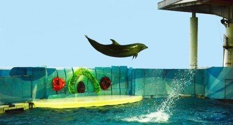 ジャンプするイルカ