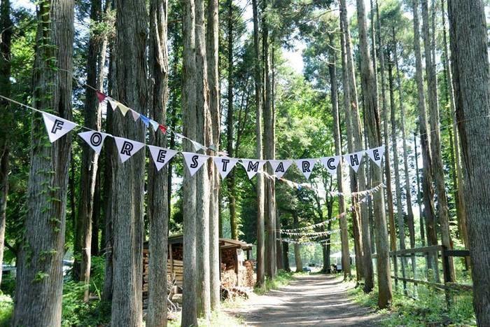 昭和の森フォレストビレッジの山道の写真