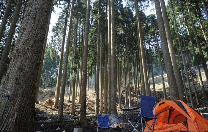 若杉高原おおやキャンプ場の林間風景