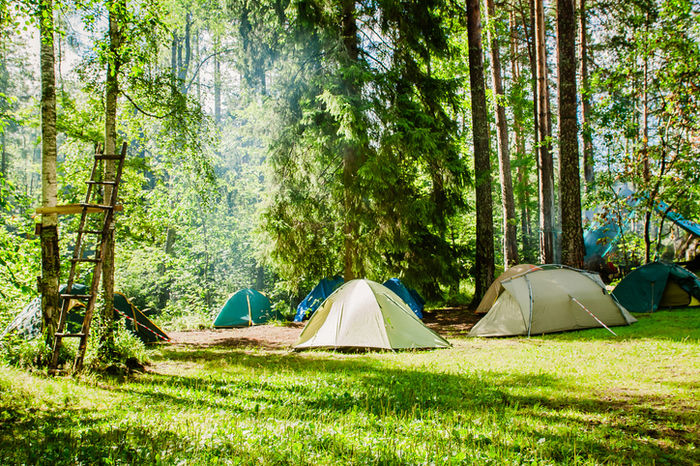 森の中のテントサイトに貼ってあるテントの写真