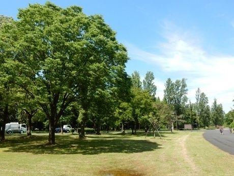 緑豊富な都立水元公園内の写真